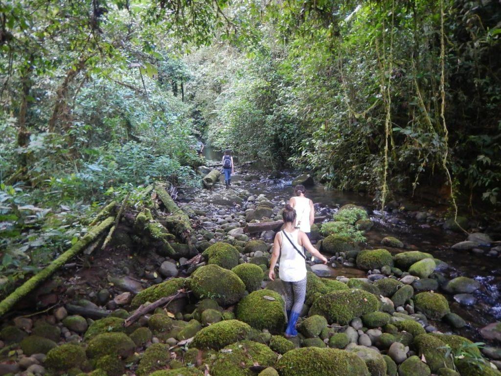 Urlaub in Südamerika Reise nach Ecuador Dschungeltour | kuchengeschichten
