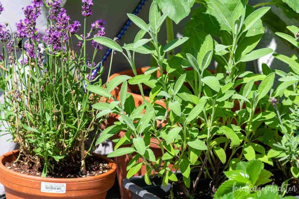 Balkongarten Lavendel Salbei Erdbeeren | kuchengeschichten